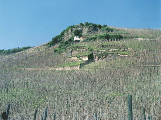 The Wehlener Sonnenuhr vineyard, with its sundial just below the summit